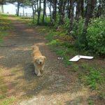 Cachorro segue carro do Google Street View e aparece em diversas fotos