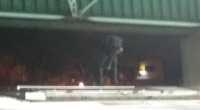 Cachorro sobe em vagão do Metrô e atrasa circulação na Zona Leste de SP
