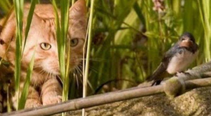 Gatos abandonados serão recolhidos
