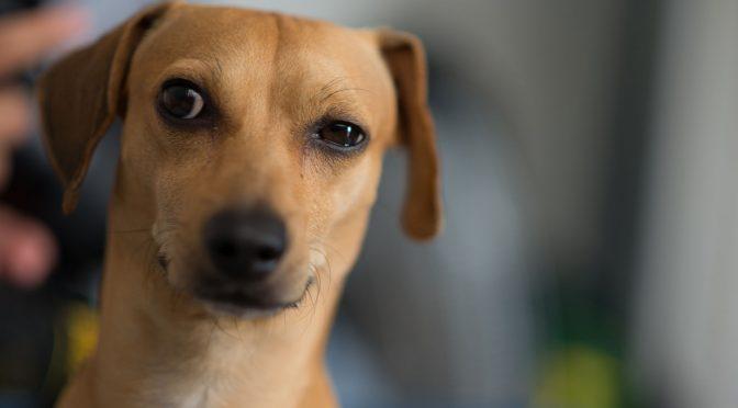 13 coisas que todo dono de cachorro faz escondido