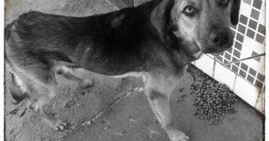Cachorro para adoção