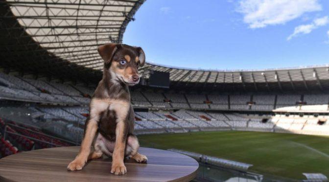 Mineirão adota cachorrinha como mascote para incentivar adoção de animais