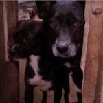 Evento busca família para 70 cães e gatos resgatados da Cracolândia
