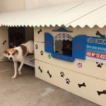 Eles criaram 'cãodomínios' para cachorros de rua e a ideia viralizou