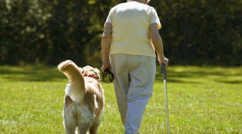 Estudo revela como idosos que vivem com um cão tem uma vida melhor