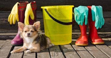 Especialista explica como deve ser feita a limpeza em casa com animais