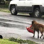 Imagens de cães que foram abandonados durante a passagem do furacão Harvey