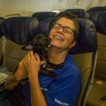 Companhia aérea oferece voo especial para salvar cães e gatos de furacão