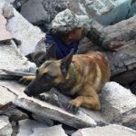Os quatro odores que são sentidos por cães farejadores após catástrofes