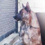 Cachorro 'agressivo' é sentenciado à morte. Mas o inesperado acontece