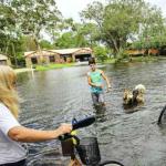Pessoas que abandonaram seus animais durante o furacão Irma responderão criminalmente
