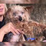 Canil certificado espancava animais em Osasco: 'Filme de terror'