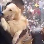 Vídeo mostra cachorro sendo retirado de escombros na Cidade do México