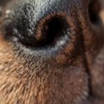 8 cheiros que os cães detestam e você tem na sua casa