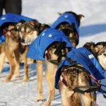 PETA cria abaixo-assinado contra corrida de trenó no Alasca