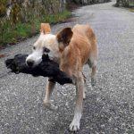 A verdadeira história do cachorro que comoveu a Espanha