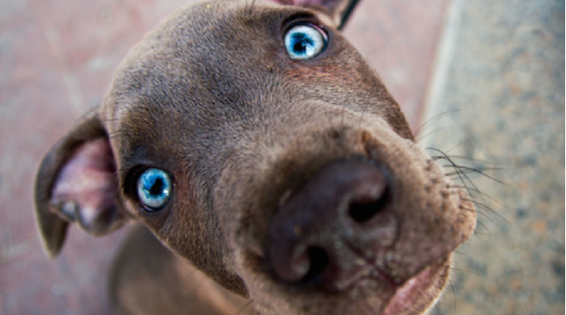 Como um cão aprende seu nome?