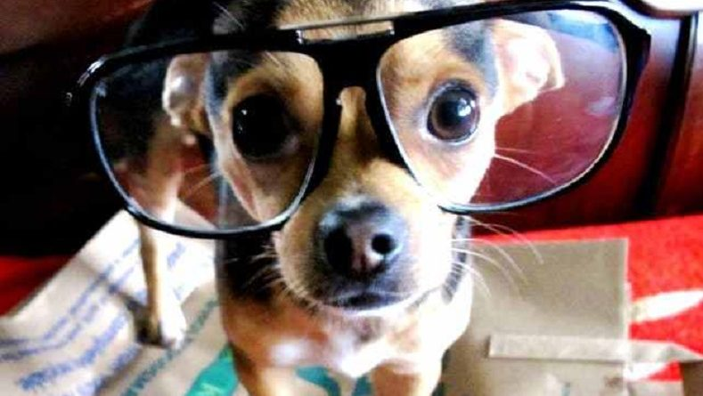 4 coisas que os cachorros conseguem sentir antes de acontecerem