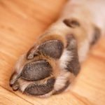 Mulher é diagnosticada com 'coração partido' após morte de cachorro