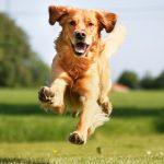 Conheça o Coaching Dog