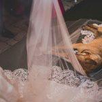 Vira-lata que invadiu casamento e deitou no véu da noiva é adotado por casal