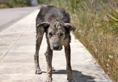 Sem esperança de vida, ela vagava pelas ruas doente e faminta