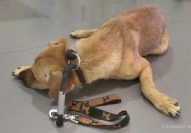 Otto de tão maltratado, ao ser tocado por humanos, urinava em si mesmo