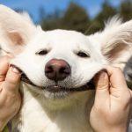 10 sinais que seu cão está estressado