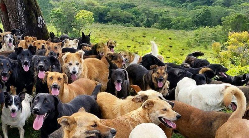 """Conheça a """"Terra dos Perdidos"""": um paraíso para cães abandonados na Costa Rica"""