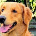 Campanha na internet tenta localizar animal desaparecido após acidente