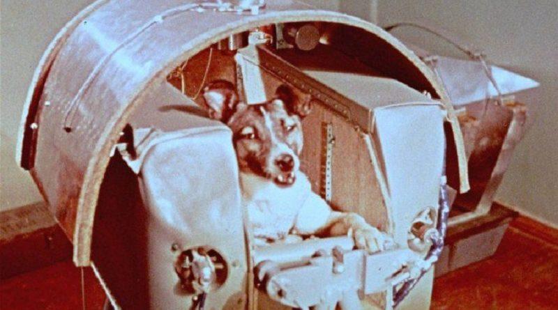 Morte da cadela Laika em missão espacial completa 60 anos