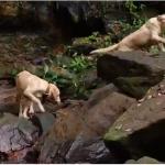 Pousada tem cães como guias para levar turistas até cachoeiras em Taquaruçu