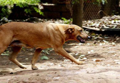 Cadela que levava marmita morre após ser picada por cobra
