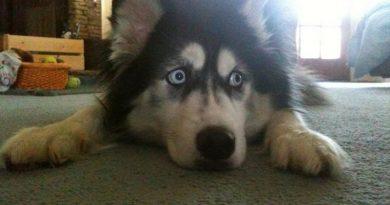O que fazer se o meu cachorro está estressado
