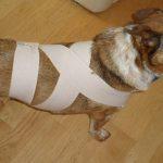 Cachorro e fogos não combinam: Conheça alguns cuidados