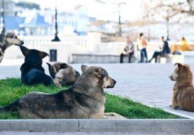 """Cães abandonados são mortos para """"limpar"""" cidades russas que sediarão a Copa 2018"""
