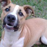 Cachorro foge de casa e é encontrado comendo pipoca no cinema