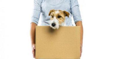 O abandono pode afetar o psicológico dos cães