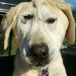 Cão que foi abandonado por ser feio é adotado e passa por mudança de comportamento