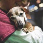 Cadela cega de 18 anos encontra sua primeira visitante no abrigo