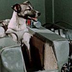 7 fatos sobre Laika, o primeiro cachorro a ir para o espaço