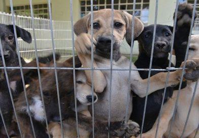 Após construção de canil, presídios de Tremembé vão receber cães e gatos abandonados