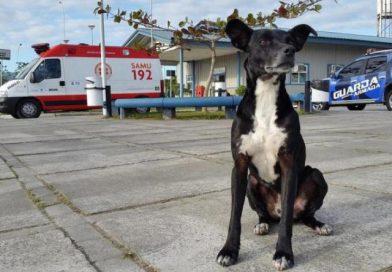 Cachorro que esperava há três anos pelo dono em hospital morre atropelado