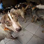 Ex-prefeito é condenado a 20 anos de prisão por chacina de 400 cães no Pará