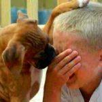 """""""O cachorro escuta tudo"""", inclusive a sua lágrima antes de cair"""