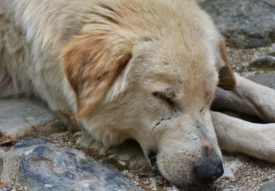 Limpeza sangrenta: a verdade sobre a matança de cães para a Copa na Rússia