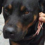Cachorro encontrado em Moema, SP