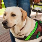 Motorista da Uber que se recusou a transportar cão-guia terá de indenizar deficiente visual