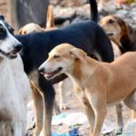 Animais abandonados ganham recomeço em lares paulistanos e abrigos