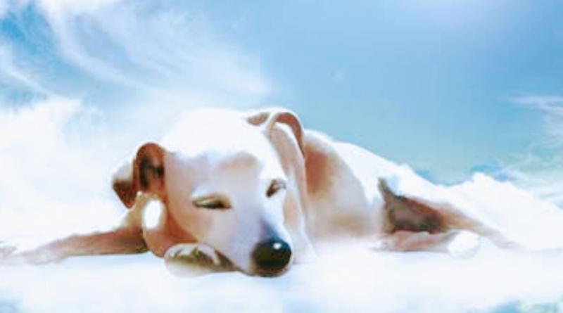 Veterinário revela o que os cães sentem antes de morrer